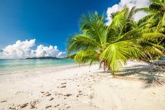 Mooi strand met palm in Seychellen Stock Foto