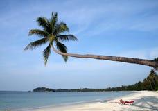 Mooi strand met palmen Stock Afbeelding