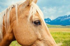 Mooi tan paard op gebied met bergen en wolken stock afbeeldingen