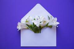 Mooi teder boeket van Alstroemeria in envelop op blauwe bac Royalty-vrije Stock Afbeeldingen
