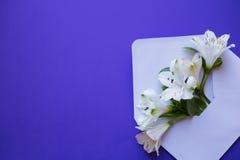 Mooi teder boeket van Alstroemeria in envelop op blauwe bac Royalty-vrije Stock Afbeelding