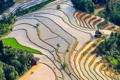 Mooi terrasvormig padieveld in Hoang Su Phi in Vietnam Stock Foto