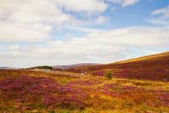 Mooi toneelberglandschap De Bergen Nationaal Park van Wicklow, Provincie Wicklow, Ierland Stock Afbeelding