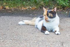 Mooi tricolored kat zit op de wegspatie terug royalty-vrije stock foto's