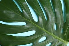 Mooi tropisch blad als achtergrond royalty-vrije stock foto's