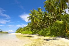 Mooi tropisch bos Royalty-vrije Stock Foto