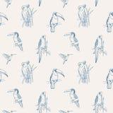 Mooi tropisch naadloos patroon met het verschillende exotische vogels zitten vector illustratie