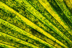 Mooi tropisch palmblad Stock Afbeeldingen
