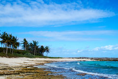 Mooi Tropisch Strand Stock Afbeeldingen
