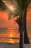 Mooi tropisch strand bij zonsondergang Stock Foto