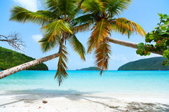 Mooi tropisch strand in de Caraïben stock afbeelding