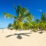 Mooi tropisch strand met kokosnotenpalm Stock Afbeeldingen