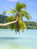 Mooi tropisch strand in Seychellen Stock Afbeeldingen