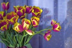 Mooi tulpenboeket Royalty-vrije Stock Foto