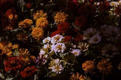 Mooi van kleurrijke, gele, roze, rode en oranje bloemen in tuin in Chiang Mai, Thailand royalty-vrije stock foto's
