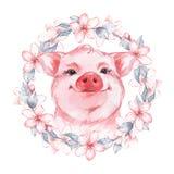 Mooi varken De illustratie van de waterverf stock illustratie
