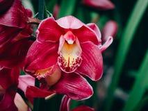 Mooi vele orchideebloem in de tuin royalty-vrije stock foto's