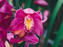 Mooi vele orchideebloem in de tuin royalty-vrije stock afbeelding