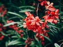 Mooi vele orchideebloem in de tuin stock afbeelding