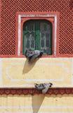 Mooi Gekleurd Venster bij het Paleis van de Stad van Jaipur Royalty-vrije Stock Foto