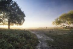 Mooi verspreid licht op landschap met rood hertenmannetje op Autu Royalty-vrije Stock Foto's