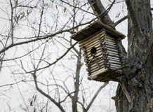Mooi vogelhuis in een boom in de lente Stock Foto