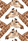 Mooi volwassen Giraf hoofd naadloos patroon Stock Fotografie