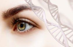 Mooi vrouwelijk oog die van DNA-kettingen kijken stock fotografie