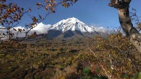 Mooi vulkanisch landschap - mening van rotsachtige kegelvulkaan, geeloranje bos stock videobeelden