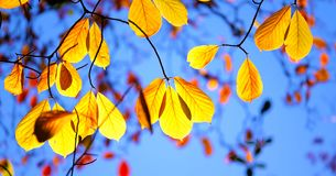 Mooi Washington Autumn Nature Scenery - Washington Park Arboretum royalty-vrije stock afbeelding