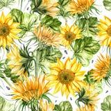Mooi waterverf naadloos patroon met zonnebloem en bladeren stock illustratie