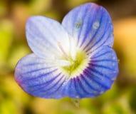 Mooi weinig blauwe bloem op aard royalty-vrije stock afbeelding