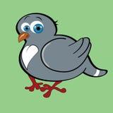 Mooi weinig duif Stock Foto