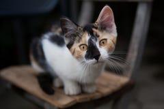 Mooi weinig kat op stoel Royalty-vrije Stock Foto