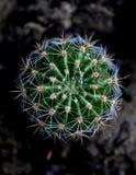 Mooi weinig ronde cactus stock foto