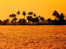 Mooi wellustig tropisch zonsonderganglandschap met silhouet van pa Stock Foto's
