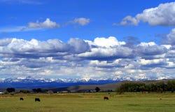 Mooi westelijk land Royalty-vrije Stock Foto's