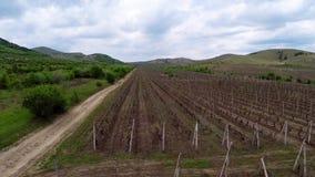 Mooi wijngaardlandschap, luchtmening stock videobeelden