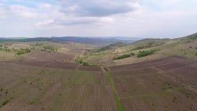 Mooi wijngaardlandschap, luchtmening stock footage