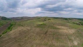 Mooi wijngaardlandschap, luchtmening stock video