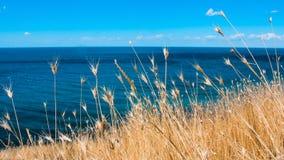 Mooi wild gras op het overzees Royalty-vrije Stock Foto's