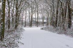 Mooi wit sneeuwdiebos met een weg volledig in witte sneeuw, wintertijdachtergrond, Nederlands bos in koud weer wordt behandeld stock foto