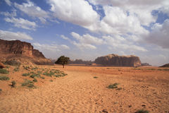 Mooi woestijnlandschap met solitaire boom Stock Foto's