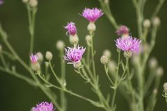 Mooi zacht geconcentreerd detail van purpere bloemen op een gebied stock afbeeldingen