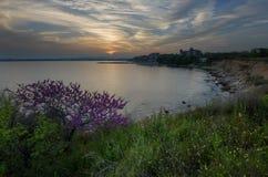 Mooi Zeegezicht Prachtige de lentezonsondergang op een gebied van bloemen Burgas, Bulgarije De Zwarte Zee Royalty-vrije Stock Foto's