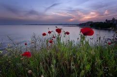 Mooi Zeegezicht Prachtige de lentezonsondergang op een gebied van papavers Burgas, Bulgarije De Zwarte Zee Royalty-vrije Stock Afbeeldingen
