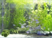 Mooi zoetwater geplant aquarium stock fotografie