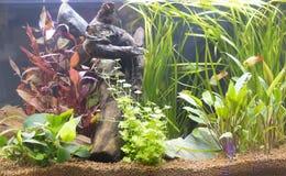 Mooi zoetwater geplant aquarium stock foto's