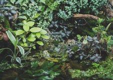 Mooi zoetwater groen aquarium stock foto