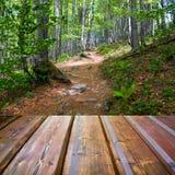 Mooi zonlicht in de vloer van de herfst bos en houten planken Stock Afbeelding